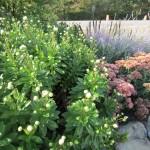 Eldredge flower beds