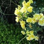 Stoney_Brook_Gardens_29