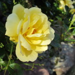 Stoney_Brook_Gardens_28