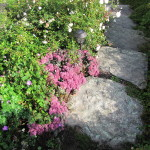 Stoney_Brook_Gardens_21