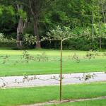 Stoney_Brook_Gardens-1