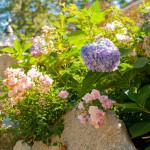 Stoney_Brook_Gardens-26