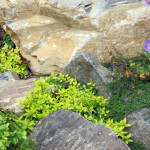Stoney_Brook_Gardens-6