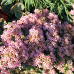 Stoney Brook Landscaping - Garden 7